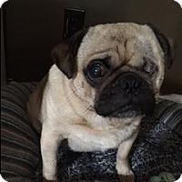 Adopt A Pet :: Cooper - Bellbrook, OH