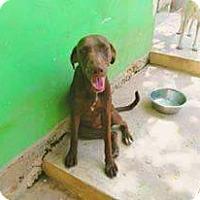 Adopt A Pet :: Tatty - St. Catharines, ON