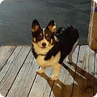 Adopt A Pet :: Lily - Freeport, NY