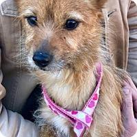 Adopt A Pet :: Candy - Allentown, PA