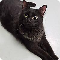 Adopt A Pet :: Pippa - Fort Riley, KS