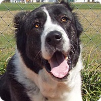 Adopt A Pet :: Corina - Englewood, FL