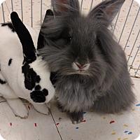 Adopt A Pet :: Dalia and Poppie - Warren, MI