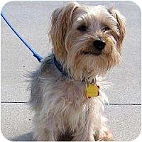 Adopt A Pet :: Sparky - Hardy, VA