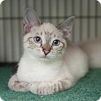 Adopt A Pet :: Dulce - Shelton, WA