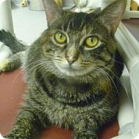 Adopt A Pet :: Scarlett - Hamburg, NY