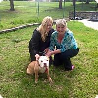 Adopt A Pet :: Rogue - Sacramento, CA