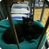 Adopt A Pet :: Jessie - Caistor Centre, ON