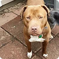 Adopt A Pet :: Talia - Medina, OH