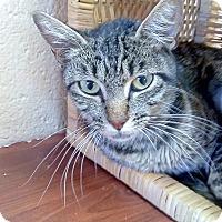 Adopt A Pet :: Lux - Chula Vista, CA