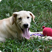 Adopt A Pet :: Blansett - Charlemont, MA