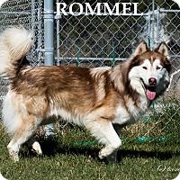Adopt A Pet :: Rommel - Patterson, CA
