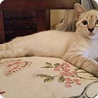 Adopt A Pet :: Sebastian - Ocala, FL