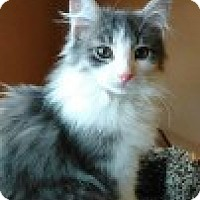 Adopt A Pet :: Thunder - McHenry, IL
