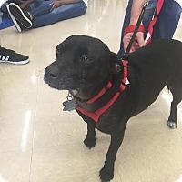 Adopt A Pet :: Lucy - Homestead, FL