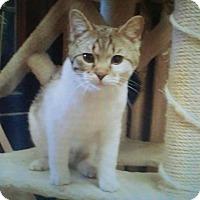 Adopt A Pet :: Sidney - Delmont, PA