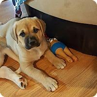 Adopt A Pet :: Nukka - PORTLAND, ME