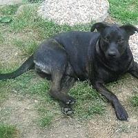 Adopt A Pet :: Nicole - Staunton, VA