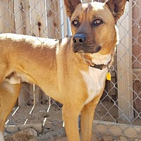 Cattle Dog Mix Dog for adoption in Apple Valley, California - B2