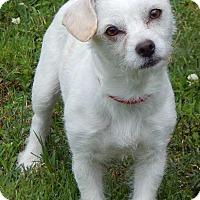 Adopt A Pet :: Mojo(10 lb) Fun, Sweet, Smart - SUSSEX, NJ