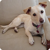 Adopt A Pet :: PENNY - Hurricane, UT