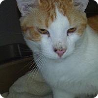 Adopt A Pet :: Opie Jay - Hamburg, NY