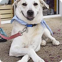 Adopt A Pet :: Daisy - Homewood, AL