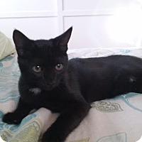 Adopt A Pet :: Lilli - Sherman Oaks, CA