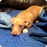 Adopt A Pet :: Fraiser - Savannah, GA