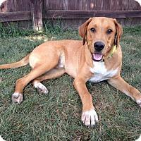 Adopt A Pet :: Huck - New Oxford, PA