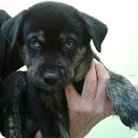 Adopt A Pet :: Kahlua - Thousand Oaks, CA