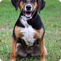Adopt A Pet :: Twix - Waldorf, MD