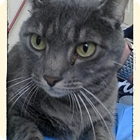 Adopt A Pet :: Lacey Dee - Trevose, PA