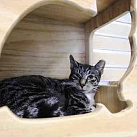 Adopt A Pet :: CORNELIUS - Hampton Bays, NY
