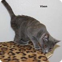 Adopt A Pet :: Vixen - Madisonville, TN