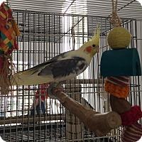 Adopt A Pet :: Samson,Delihla,Sparky - Punta Gorda, FL