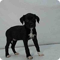 Adopt A Pet :: *EPONINE - Orlando, FL