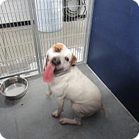 Adopt A Pet :: Matrix (HW Neg)* - Henderson, NC