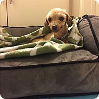 Adopt A Pet :: Rita - Los Angeles, CA