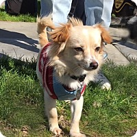 Adopt A Pet :: Daisy - Pleasanton, CA