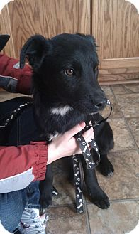 Labrador Retriever Mix Puppy for adoption in Nanuet, New York - Parker