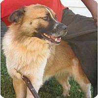 Adopt A Pet :: Beethoven - Conyers, GA