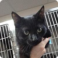 Adopt A Pet :: Bill - St. Petersburg, FL