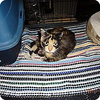 Adopt A Pet :: Kim - Saint Albans, WV
