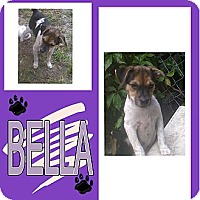 Adopt A Pet :: BELLA - Hollywood, FL