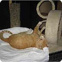 Adopt A Pet :: Mr. Bud - Wakinsville, GA