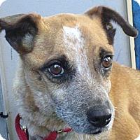 Adopt A Pet :: Tasha - Delano, MN