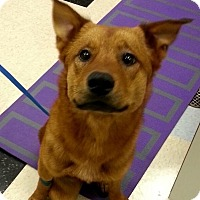 Adopt A Pet :: Russell - los Angeles, CA