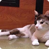 Adopt A Pet :: Marushka - Los Angeles, CA
