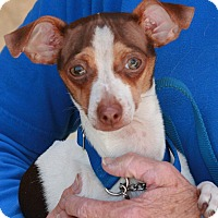 Chihuahua Mix Puppy for adoption in Palmdale, California - Charlie